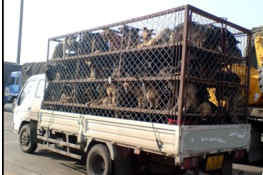 Transporter mit Hunden in China